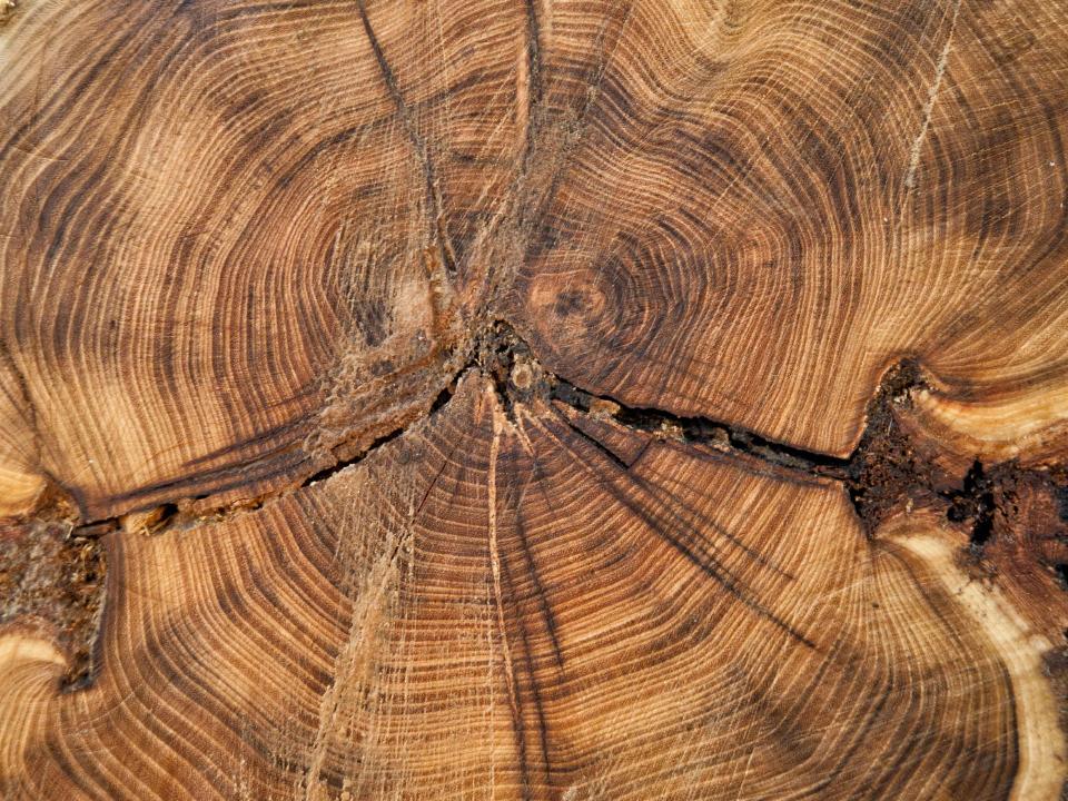 Lagage et abattage des arbres soliverdi espace vert for Offre espace vert