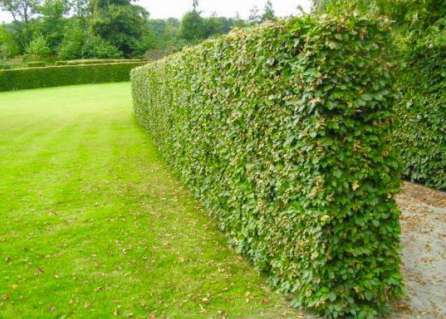 Entretien de jardin espace vert for Contrat entretien espace vert