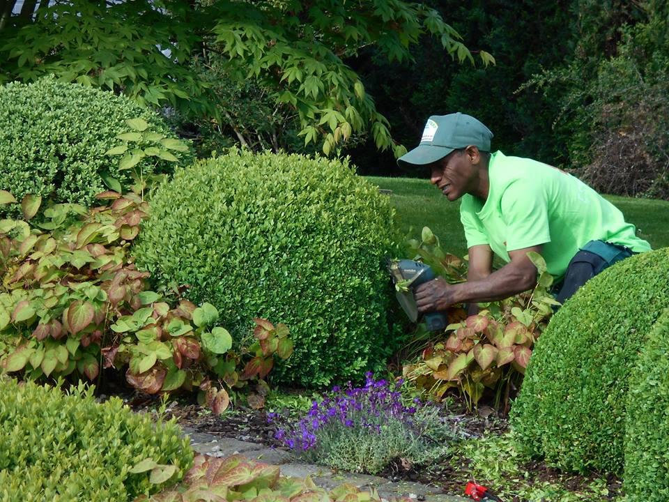 entretien jardin a l'annee