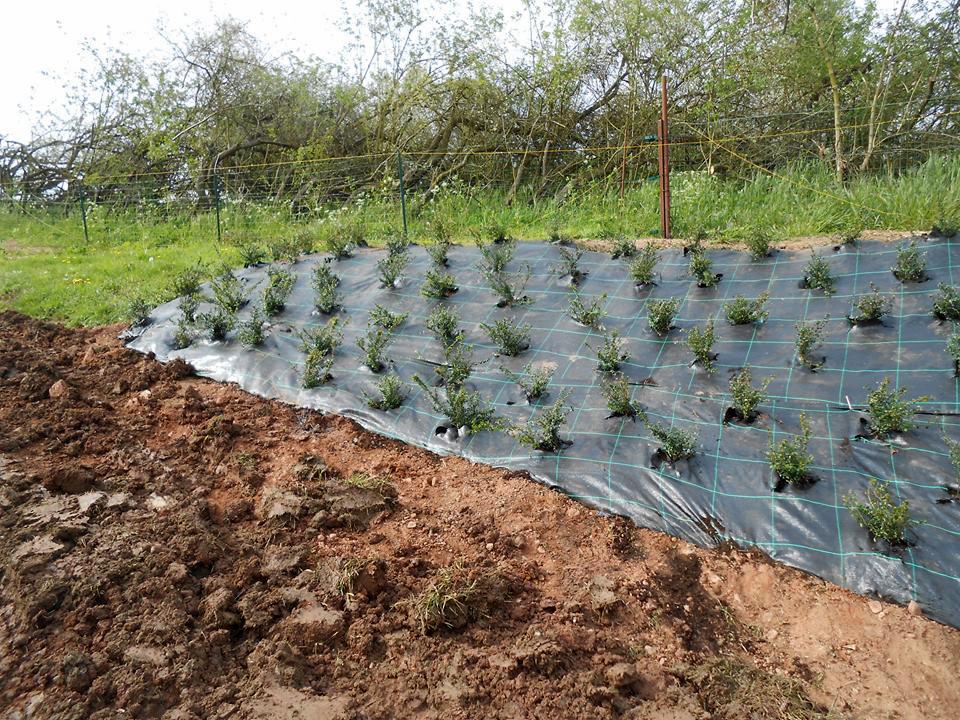plantations1