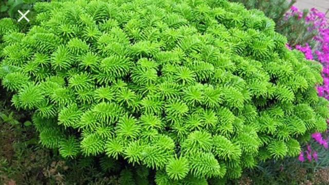 plantations-espace-vert
