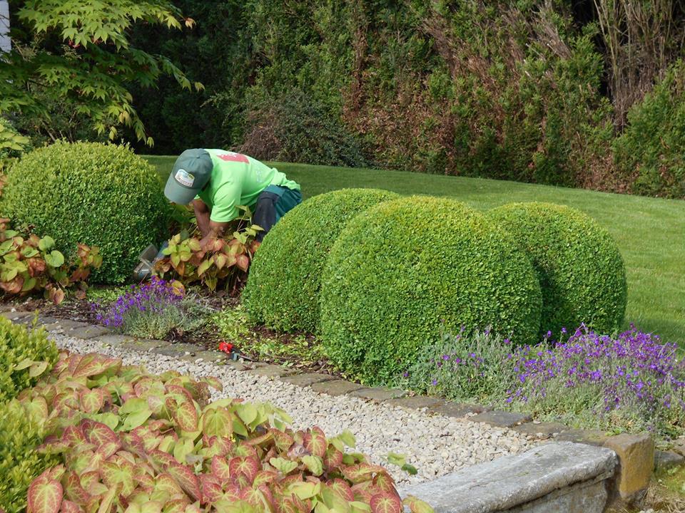 Entretien de votre jardin en province de li ge et for Entretien jardin 92