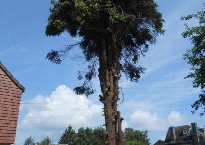 Travaux d'abattages et dessouchages d'arbre à Liège