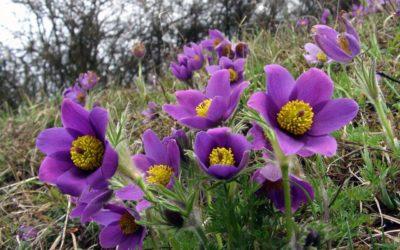 Une plante increvable pour le prochain printemps …