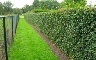 Une clôture végétalisée …