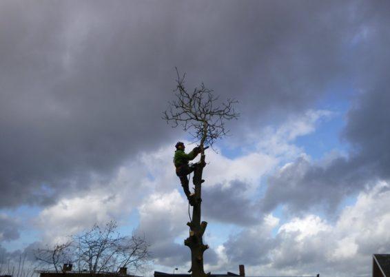 Abattage d'un arbre à Seraing