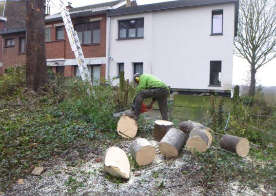 Travaux d'élagage et d'abattage d'arbre et taille douce