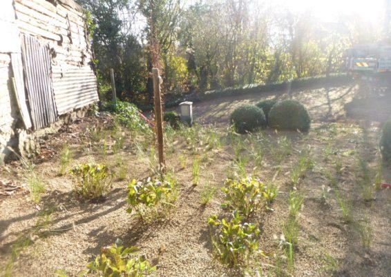 Réalisation d'une plantation à Sprimont