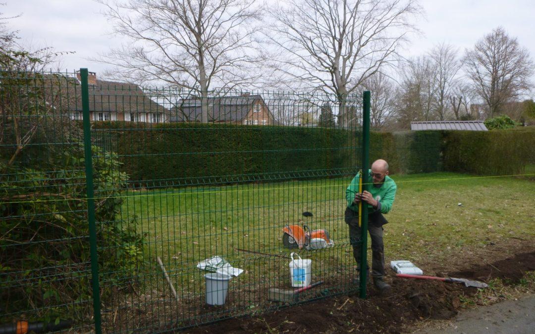 Remplacement d'une haie par une clôture végétalisée à Embourg